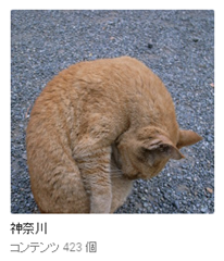 googleフォト神奈川