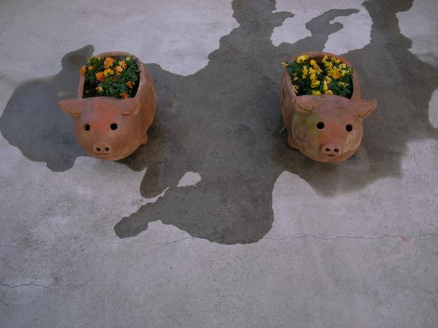 子豚の花壇