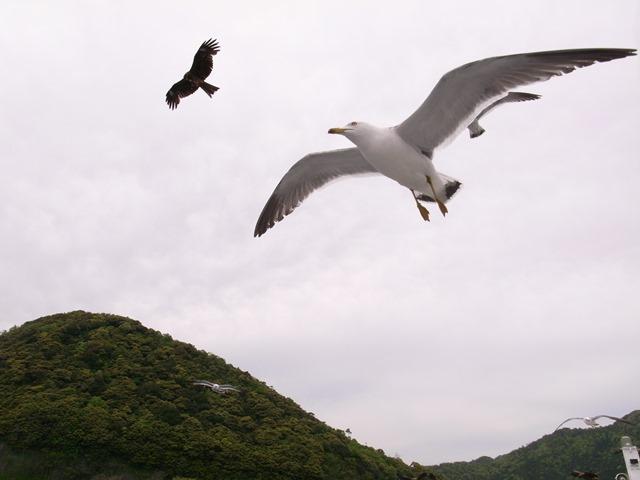 海鳥近いエキサイティング伊根湾めぐり遊覧船