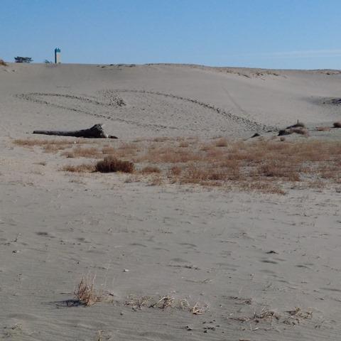中田島砂丘落書き