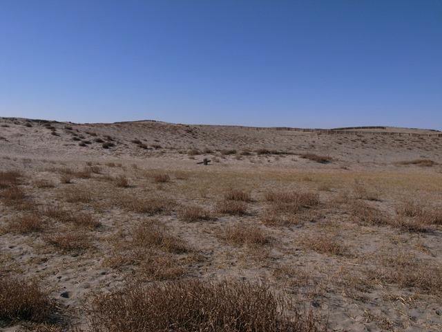 中田島砂丘草