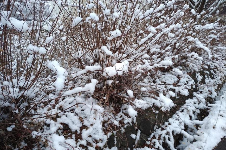 優しく積もる雪